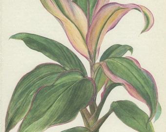 Cordyline, Club Palm, Vintage Botanical Print, Home Decor, Indoor Plant 53 Flower Art, Illustration 1968