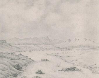 Tree Tumbo, N'tumbo, Welwitschia, Living Fossil, Namib Desert, South Africa, Pencil Drawing 42, Eberhard Koenen, 1977
