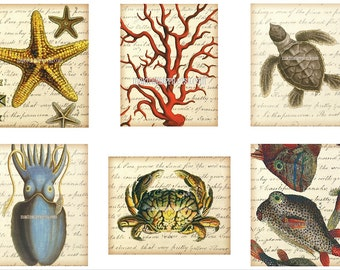 Coastal Decor Art Prints - YOUR CHOICE of three-Coral, Squid, Starfish, Sea Turtle, Lobster, Crab, Fish