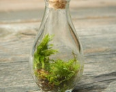 miniature droplet terrarium with moss and lichen