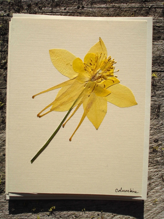 Yellow Columbine Floral Card, Handmade Pressed Flower Card by akasha Online