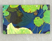 lily pad painting, oil painting, small painting, painting, caitlin williams art, caitlin hanson art