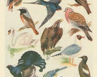 Vintage Antique 1920 Bird bookplate original lithograph art print illustration 2765