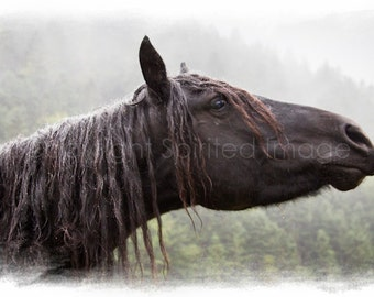 "MERENS Mare, Pyrenees. ""Ancient"", Edition Art Print, Wall Decor, Horse photo, Equine Art."