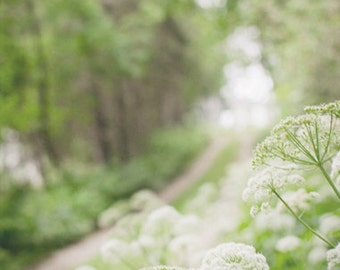 Green Nature Photograph, Country Road Photography, Forest Picture, Flower Photo,  Dreamy Landscape Wall Art