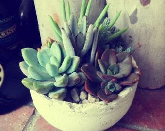 Rustic succulent living arrangement