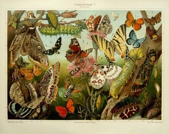 1897 Antique fine lithograph of BUTTERFLIES, BEETLES, INSECTS, Larvae... Entomology. 119 years old gorgeous print.