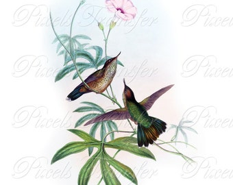 HUMMINGBIRDS Instant Download JPG Digital Downloads, small birds Wedding Clipart 257