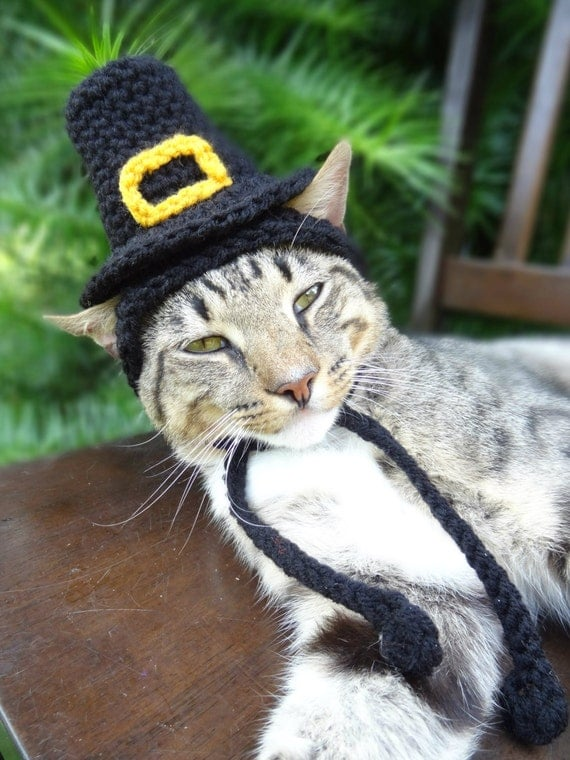 pumpkin knit cat hat