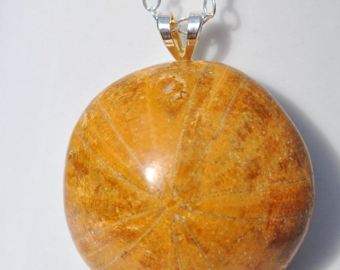 Fossilized and Polished Sand Dollar Necklace on Sterling Silver chain simple, sea urchin, minimalist