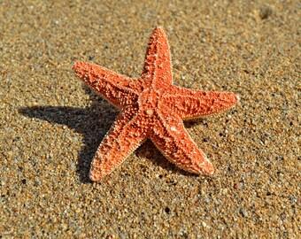 Small Starfish Mermaid Nautical Hair Clip - Mermaid  Accessories, Wedding Hair Clip, Beach Wedding, Ariel Hair Accessory