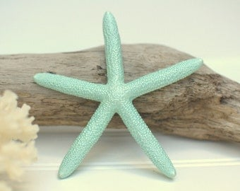 1 Pencil Starfish - Sea Mist Green - Sized 4-5""