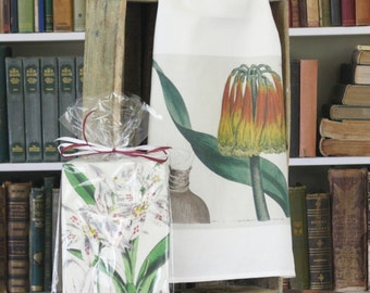 """Traditional Flour Sack Dishtowel with your choice of Vintage Artwork by William Curtis (30""""x30"""", 100% cotton, individually wrapped)"""