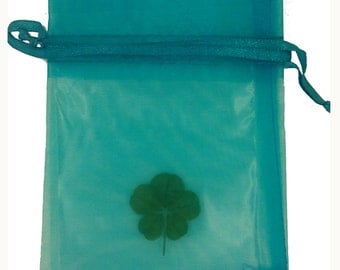 Lucky Real Five Leaf Clover from the White Clover Plant Trifolium repens - 5 Leaf Clover