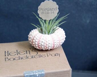 bachelorette party invitations  // air plant wedding favors // qty. 10