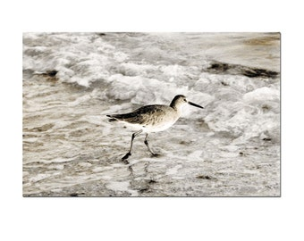 Sea Bird Beach Photography Shorebird Willet Ocean Water Surf Nautical Print