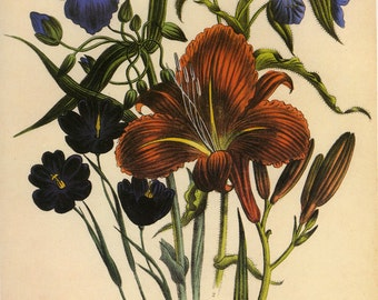 SALE Vintage Botanical Book Plate Flowers Lilly