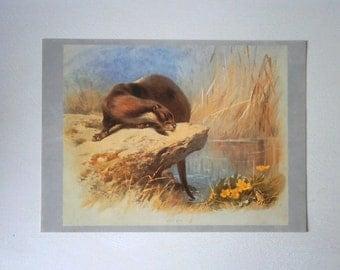 Vintage Otter Print Book Plate of Thorburn Illustration 1974