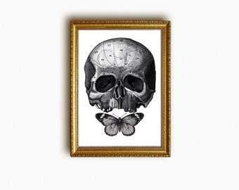 anatomical skull with butterfly art print - vintage engravings - antique human anatomy illustration