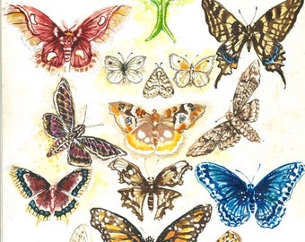 Northeastern Butterflies and Moths Print