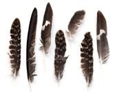 Feather Photograph, Fine Art Print, Black and White, Bird, Nature Art, Fall, Autumn, Feather Art, Wall Art, Home Decor, Square 8x8 Print