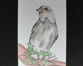 Bird, watercolor ink painting, 4x6 matted to 8x10, ChristyLDesigns
