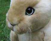 Soft Sculpture Real Bunny Rabbit PATTERN by Emma's Bears - Instant PDF