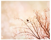 Nature Photography, tree branches, crow, blush pink, Welcome Spring, nature fine art photography print 8x10
