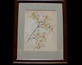 60s Botanical Plate Flowering Dogwood or Cornus Florida Spring Flower Leaves Leaf Branch Print Framed Art Frame