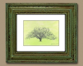 Oak Tree Drawing Watercolor Painting Savannah Candler Oak in Moss Green