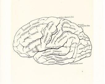 1899 Human Anatomy Print - Diagram of Cerebrum - Vintage Antique Medical Anatomy Art Illustration for Doctor Hospital Office