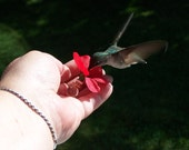 NEW Micro HUM-fi™ Mini Hand Hummingbird Feeder, Handcrafted, Hand Held, Nectar Feeder