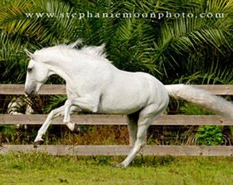 Horse Photography, White Horse Running, Horse Picture, Equine Art, Horse Print, White Stallion Running