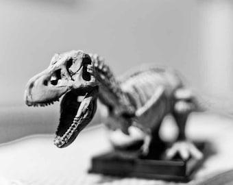 Tyson Rex - T-Rex Dinosaur Skeleton - 4x6 Fine Art Photograph