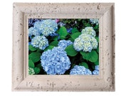 Blue Hydrangea 2 - 8x10 High Gloss Ceramic Tile for indoor and outdoor decor