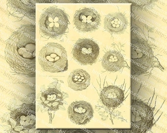 Birds Nests with Eggs Vintage Sepia Tone Drawings Digital Collage Sheet Large Images Printable Download