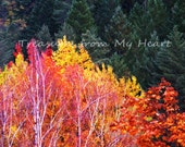Fall Colors  fine art photography