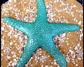 Giant Aqua Sea Star
