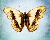 Butterfly Wall Art, Modern Home Decor, Fine Art Print, Yellow, Sunny, Baby Blue, Royal Blue, Brown, Nursery Decor, Nature Photography,
