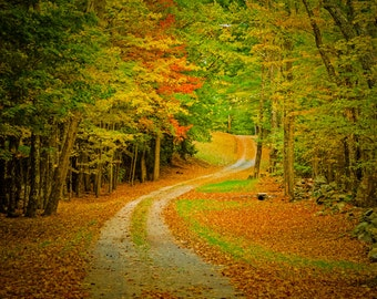 Autumn Photography Fall Colors Photo Road Path Trail Fall Forest Print Trees Yellow Leaves Landscape nat91