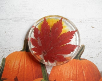 Autumn Harvest-Pressed Flower Suncatcher-Rustic, Earthy, Woodsy Warm Colors of the Season-Autumn Maple Leaf, Yellow Cosmos Blossom