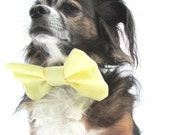 Pet Dog Bowtie-Clip On -Yellow large