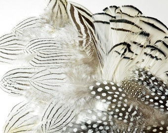 Natural MIX - Natural Silver Pheasant, Guinea Polkadot, Lady Amherst - premium millinery crafting supplies