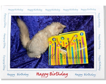 Happy Birthday Kitty Photo Greeting Card Blank Inside Kitty Cards Cat Cards - Gifts for Cat Lovers - Blue Yellow Red - Birthday Gift Bag