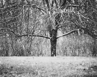 Winter landscape, Snowstorm fine art print , New England photography, black and white,  winter tree in snow, winter wall decor