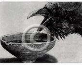 Raven artwork , Raven, Crow, Grail Quest,  Etching 2012,  5 inch x 7 inch