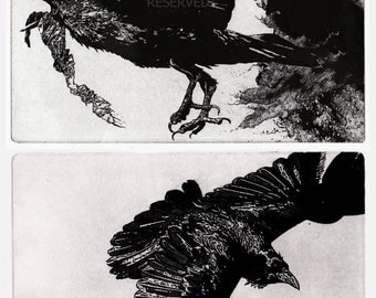 Raven artwork , Raven, crow,  Etching, 7 x 10 inches 2011