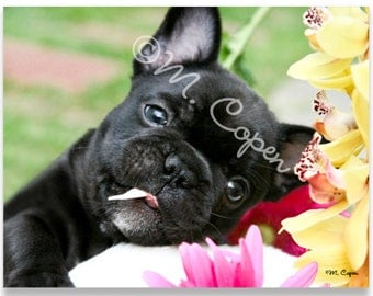 Springtime  - Brindle French Bulldog Puppy Cards - Set of 42