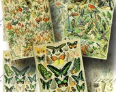 Vintage French Encyclopedia Digital Collage Sheet SALE!!! Bird, Butterfly, Floral, Marine, Nature Digital Download ATC #5 INSTANT Download