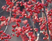 Winter Sparkles, Fine Art Photography, red berries, red, orange, grey, black, fall decoration, winter decoration, country living, holidays